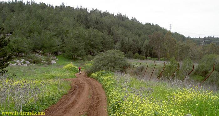 В лесу Бен Шемен