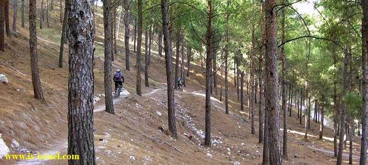 На синглах леса Бирия