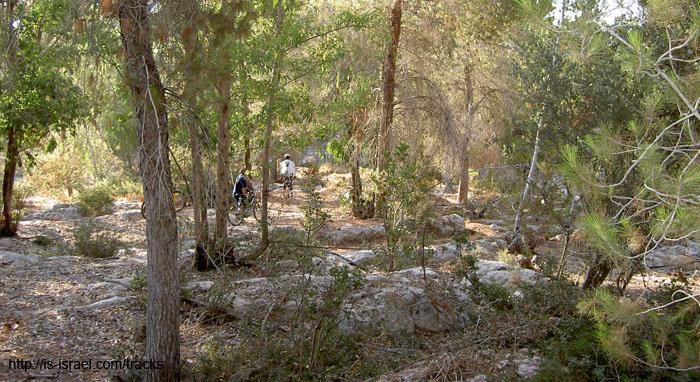 На синглах леса Харувит