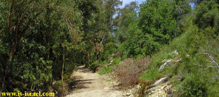 Лес Мегидо