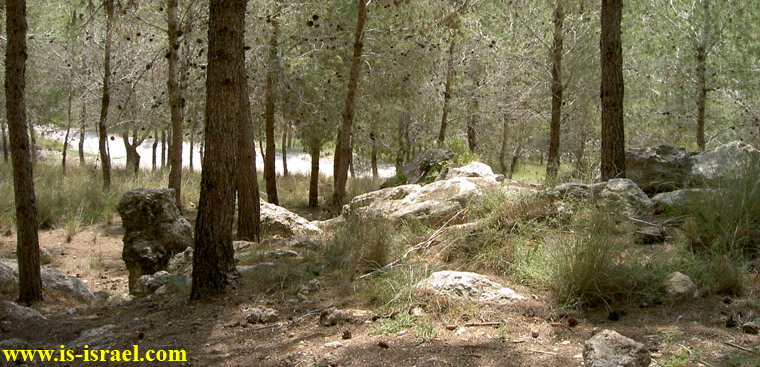 Лес ха-Мегиним