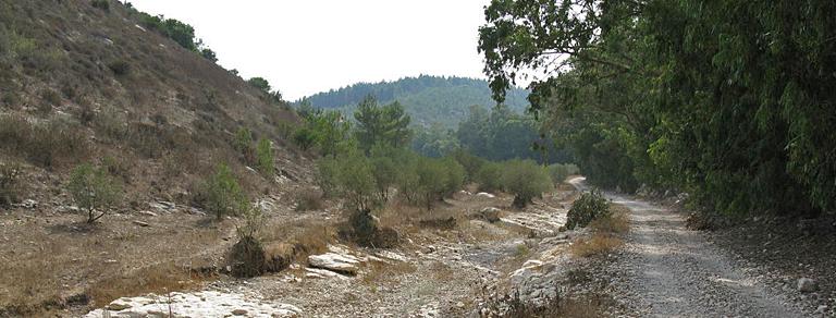 Лес Мегидо и нахаль Кини